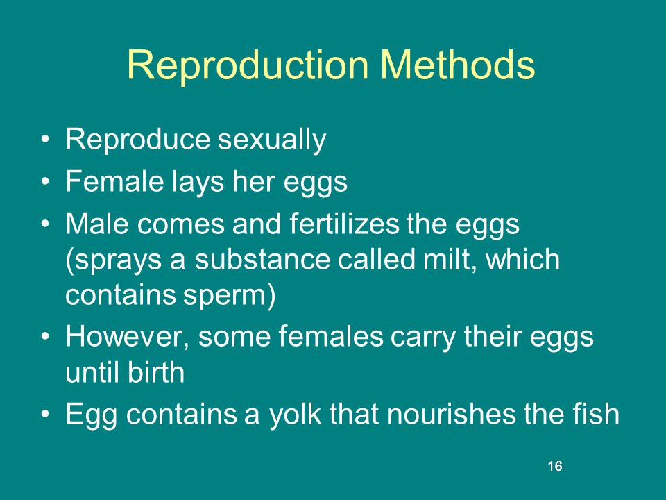 16 Reproduction Methods Reproduce sexually Female lays her eggs Male comes and fertilizes the eggs (sprays a substance called milt, which contains spe