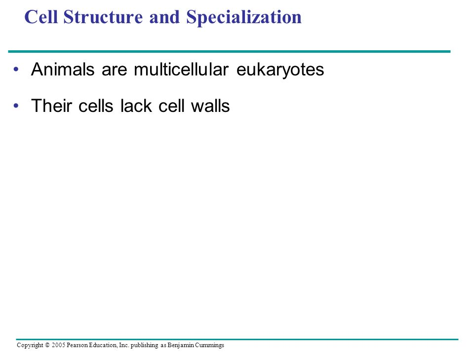 Copyright © 2005 Pearson Education, Inc. publishing as Benjamin Cummings Cell Structure and Specialization Animals are multicellular eukaryotes Their