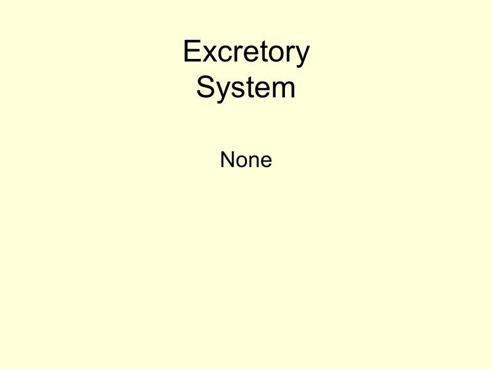 Excretory System None