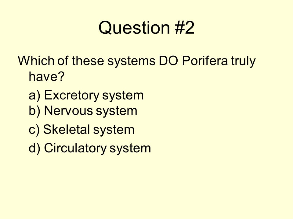 Question #2 Which of these systems DO Porifera truly have? a) Excretory system b) Nervous system c) Skeletal system d) Circulatory system
