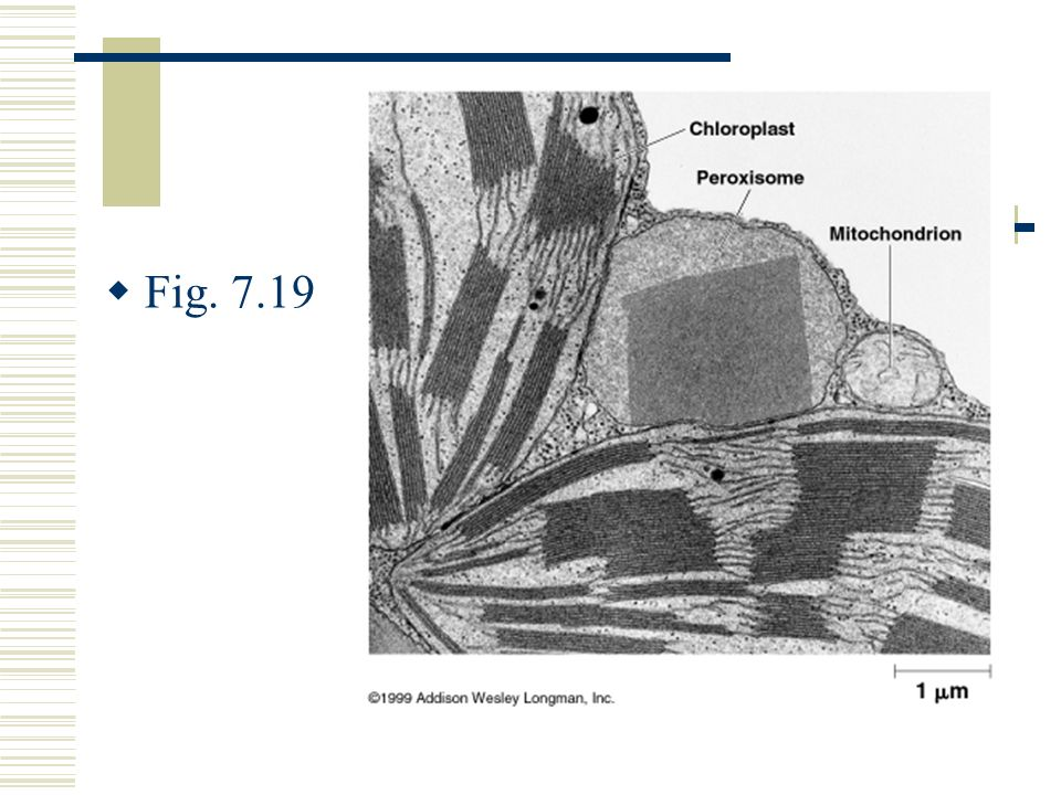 Fig. 7.19