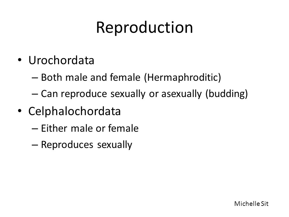 Reproduction Urochordata – Both male and female (Hermaphroditic) – Can reproduce sexually or asexually (budding) Celphalochordata – Either male or fem