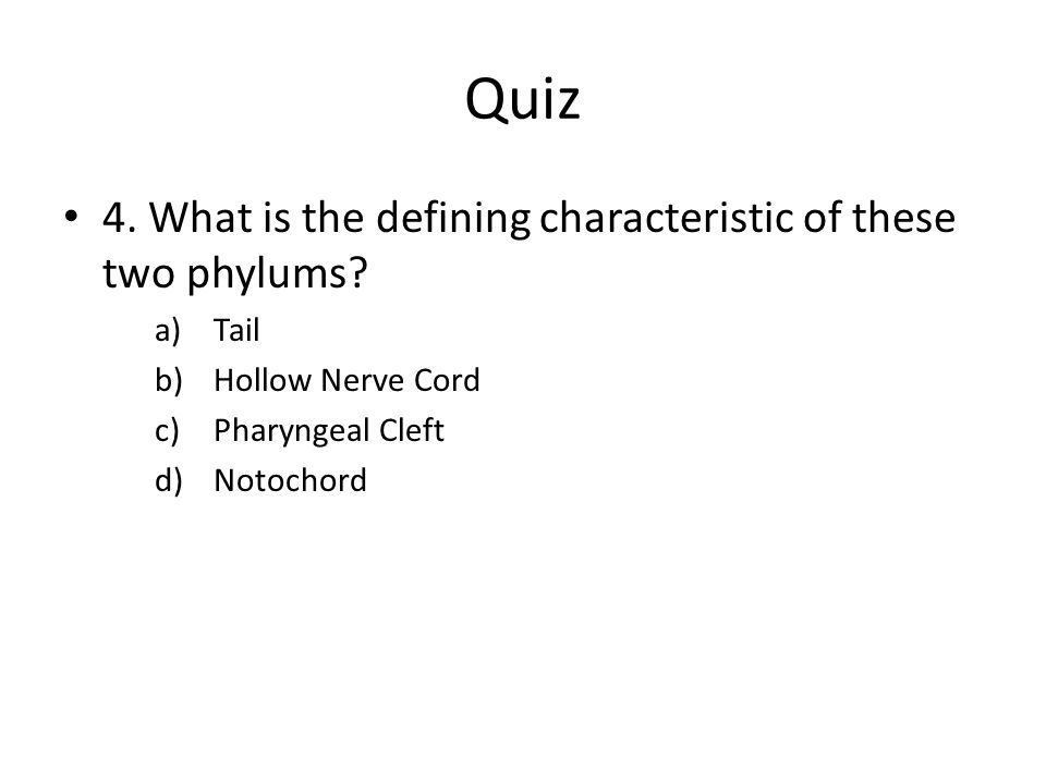 Quiz 4. What is the defining characteristic of these two phylums? a)Tail b)Hollow Nerve Cord c)Pharyngeal Cleft d)Notochord