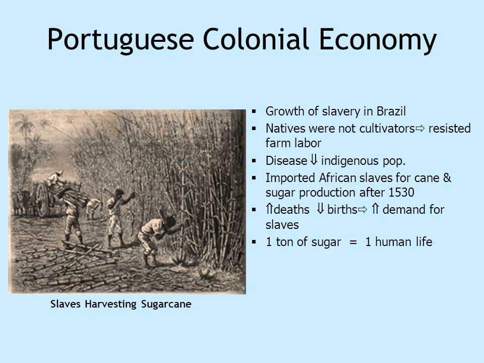 Portuguese Colonial Economy Growth of slavery in Brazil Natives were not cultivators resisted farm labor Disease indigenous pop. Imported African slav