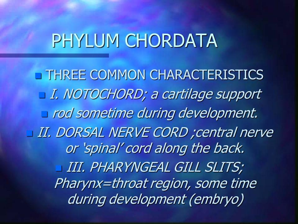 PHYLUM CHORDATA n THREE COMMON CHARACTERISTICS n I.