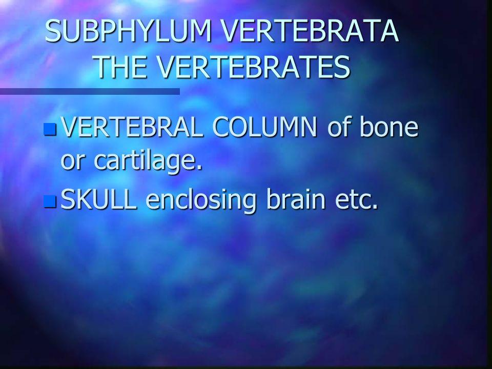 SUBPHYLUM VERTEBRATA THE VERTEBRATES n VERTEBRAL COLUMN of bone or cartilage.