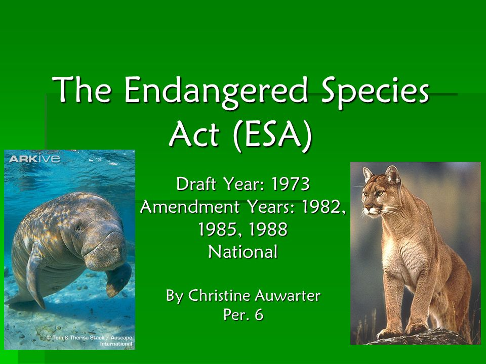 The Endangered Species Act (ESA) Draft Year: 1973 Amendment Years: 1982, 1985, 1988 National By Christine Auwarter Per. 6