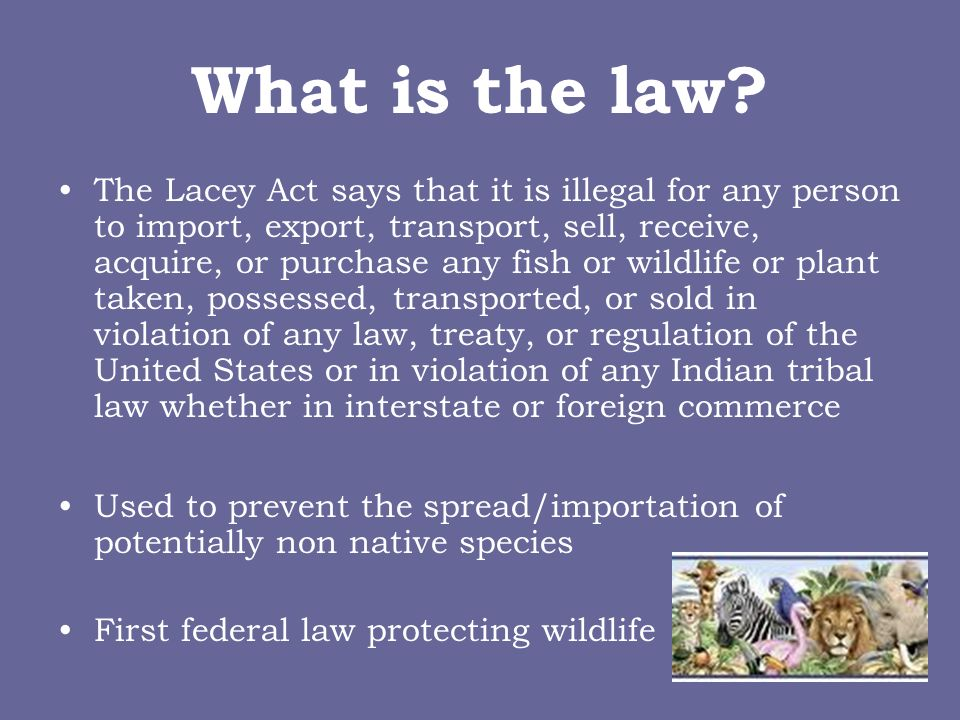 What is the law? The Lacey Act says that it is illegal for any person to import, export, transport, sell, receive, acquire, or purchase any fish or wi