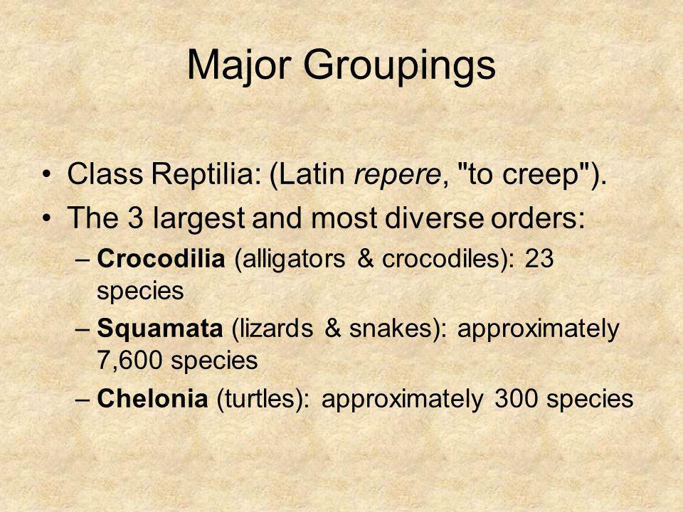 Class Reptilia: (Latin repere,