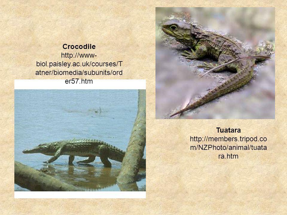 Tuatara http://members.tripod.co m/NZPhoto/animal/tuata ra.htm Crocodile http://www- biol.paisley.ac.uk/courses/T atner/biomedia/subunits/ord er57.htm
