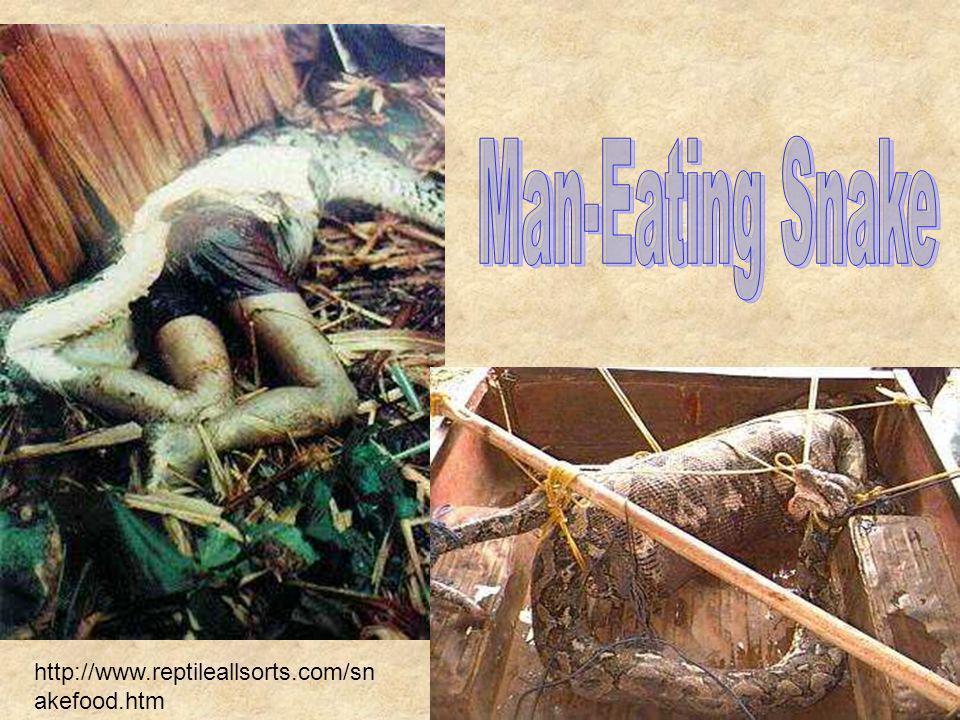 http://www.reptileallsorts.com/sn akefood.htm