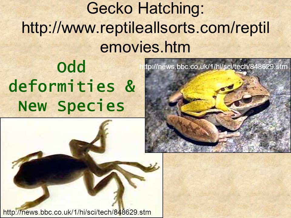 Gecko Hatching: http://www.reptileallsorts.com/reptil emovies.htm Odd deformities & New Species http://news.bbc.co.uk/1/hi/sci/tech/848629.stm