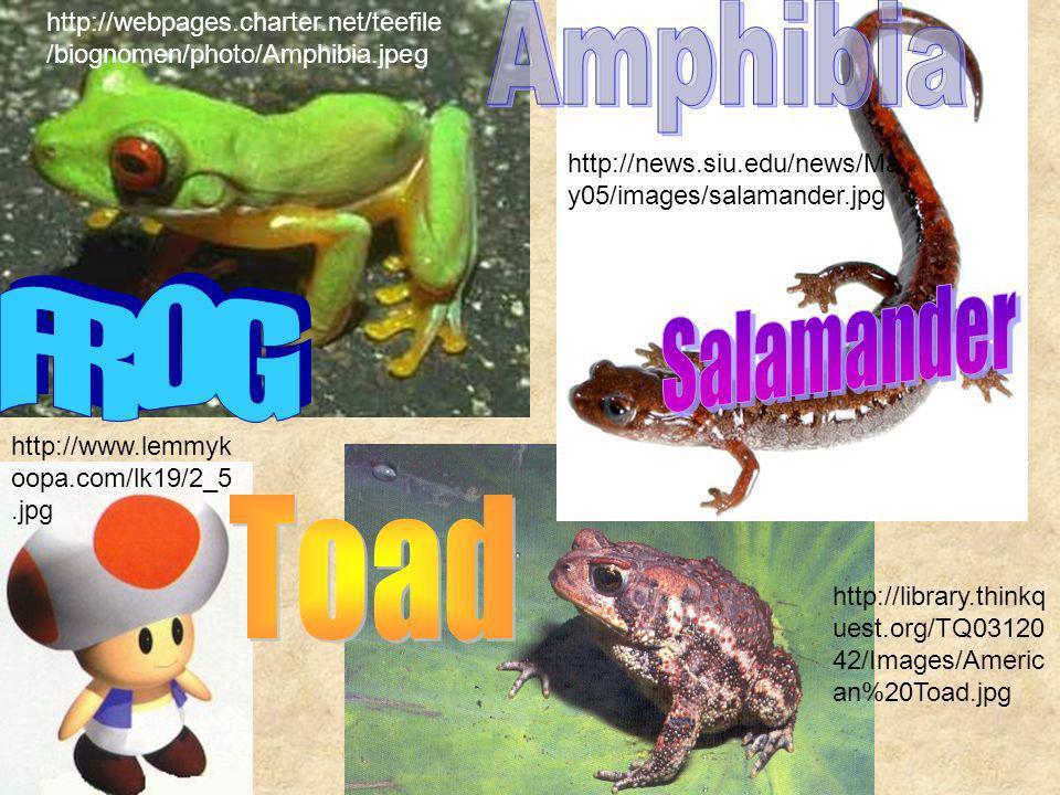 http://webpages.charter.net/teefile /biognomen/photo/Amphibia.jpeg http://news.siu.edu/news/Ma y05/images/salamander.jpg http://www.lemmyk oopa.com/lk