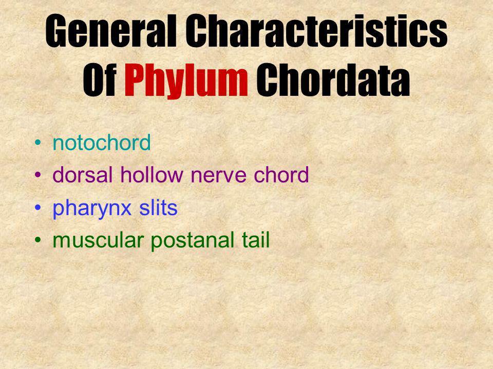 General Characteristics Of Phylum Chordata notochord dorsal hollow nerve chord pharynx slits muscular postanal tail