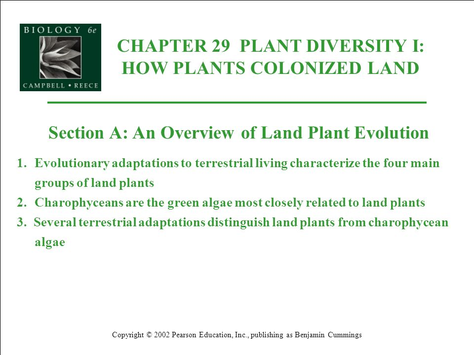 CHAPTER 29 PLANT DIVERSITY I: HOW PLANTS COLONIZED LAND Copyright © 2002 Pearson Education, Inc., publishing as Benjamin Cummings Section C2: Bryophytes 3.