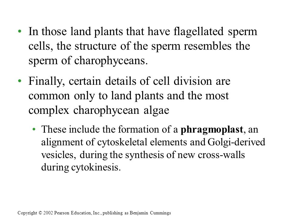 In those land plants that have flagellated sperm cells, the structure of the sperm resembles the sperm of charophyceans. Finally, certain details of c