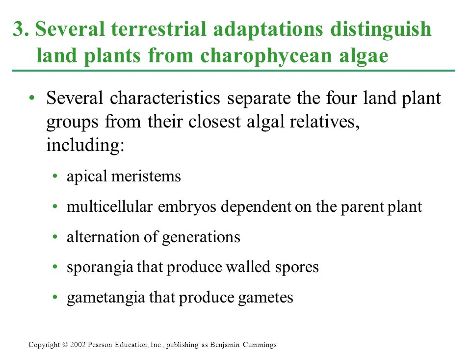 Several characteristics separate the four land plant groups from their closest algal relatives, including: apical meristems multicellular embryos depe
