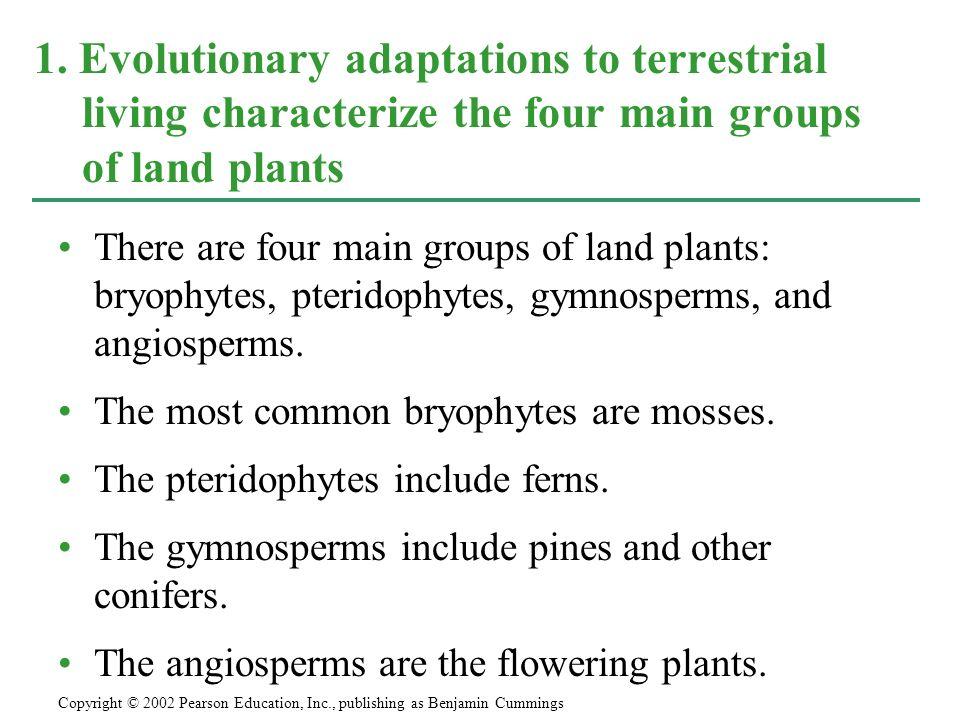 Liverworts have the simplest sporophytes among the bryophytes.