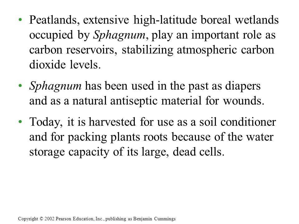 Peatlands, extensive high-latitude boreal wetlands occupied by Sphagnum, play an important role as carbon reservoirs, stabilizing atmospheric carbon d