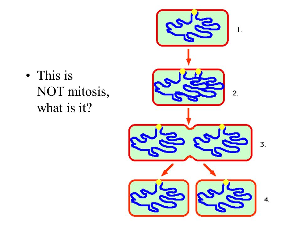 This is NOT mitosis, what is it?
