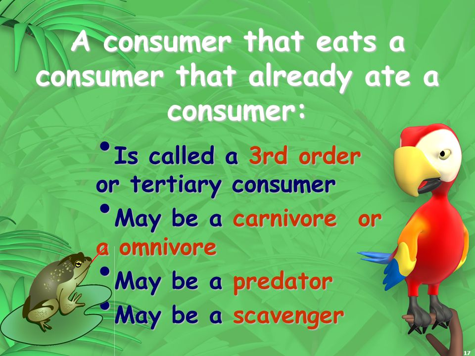 17 A consumer that eats a consumer that already ate a consumer: Is called a 3rd order or tertiary consumer Is called a 3rd order or tertiary consumer