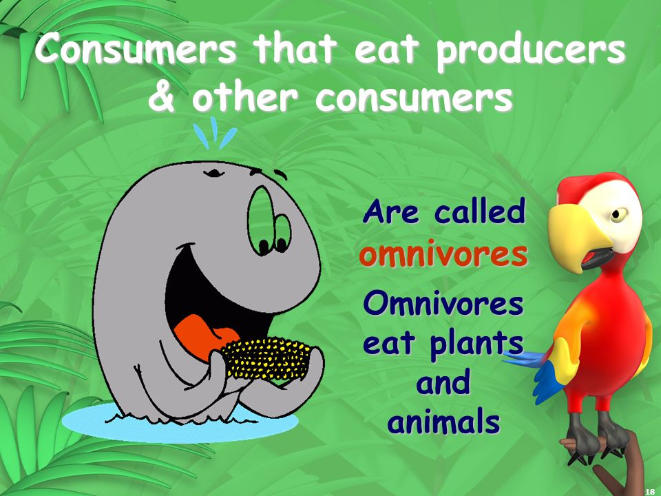 18 Consumers that eat producers & other consumers Are called omnivores Omnivores eat plants and animals