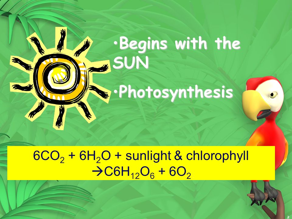 2 Begins with the SUNBegins with the SUN PhotosynthesisPhotosynthesis 6CO 2 + 6H 2 O + sunlight & chlorophyll C6H 12 O 6 + 6O 2