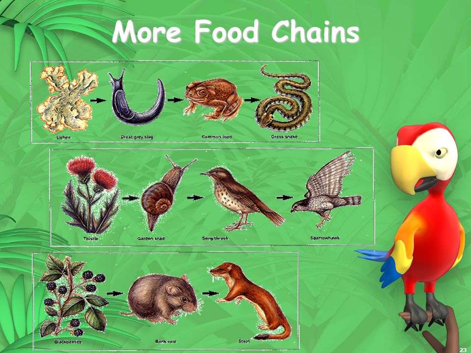 23 More Food Chains