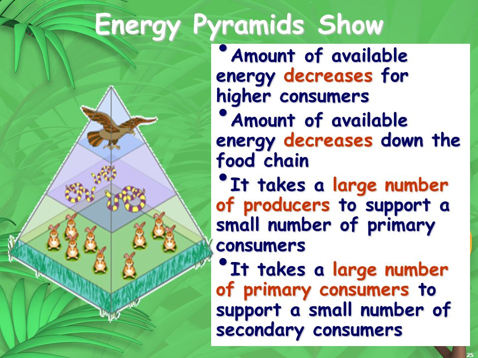 25 Energy Pyramids Show Amount of available energy decreases for higher consumers Amount of available energy decreases for higher consumers Amount of