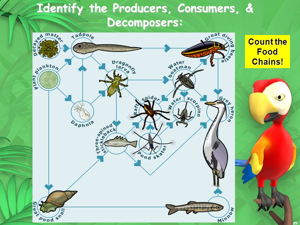 29 Identify the Producers, Consumers, & Decomposers: Count the Food Chains!
