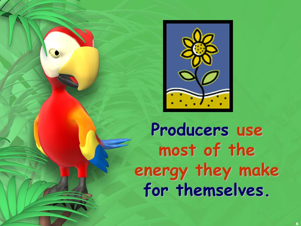 5 Producers use most of the energy they make for themselves.