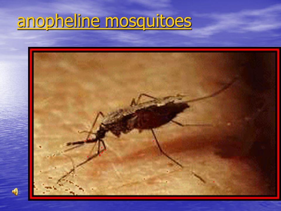 Protozoa Phylum protozoa Phylum protozoa –Include Plasmodium Causes malaria Causes malaria Carried by mosquitoes Carried by mosquitoes
