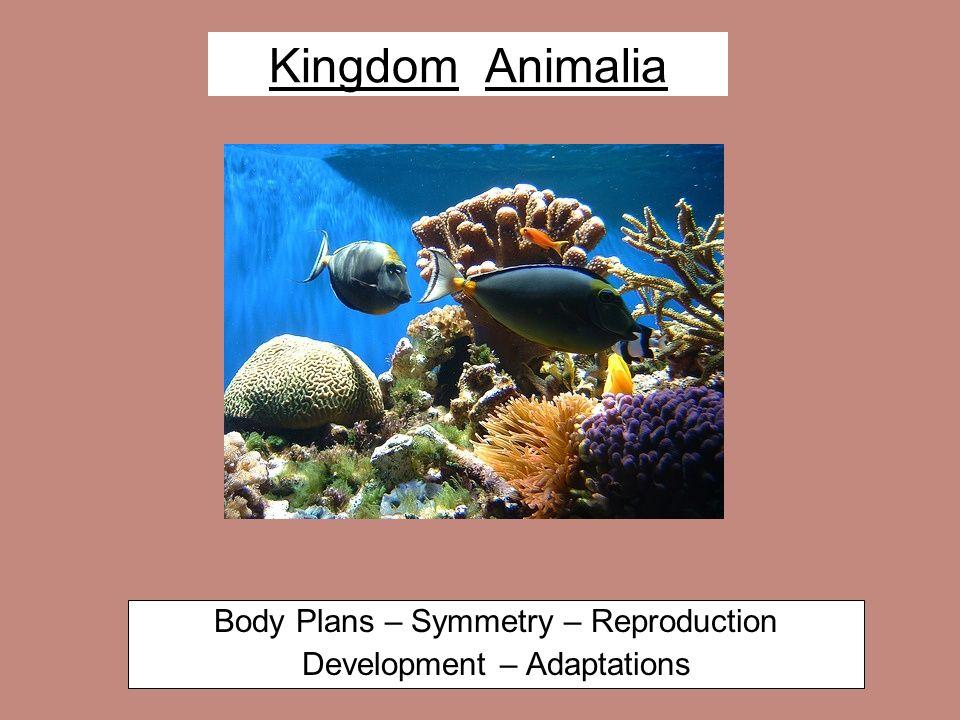 Kingdom Animalia Body Plans – Symmetry – Reproduction Development – Adaptations