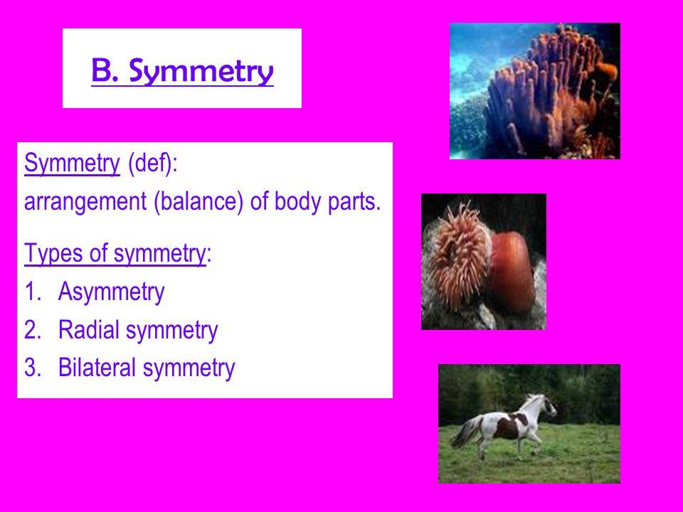 B. Symmetry Symmetry (def): arrangement (balance) of body parts. Types of symmetry: 1.Asymmetry 2.Radial symmetry 3.Bilateral symmetry