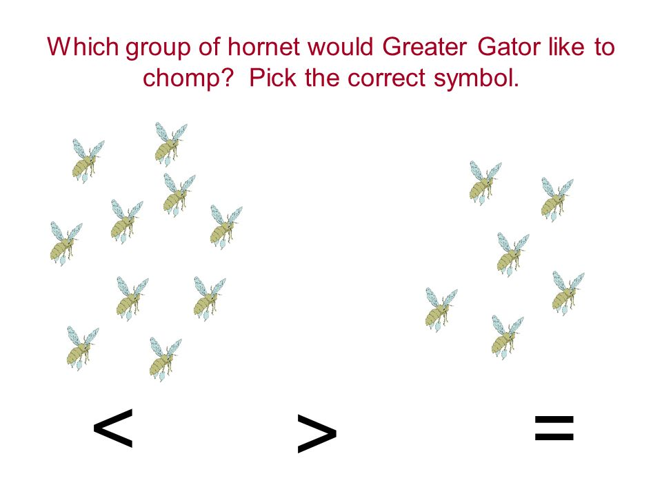 Greater Greater Gator Chomps the Hornets