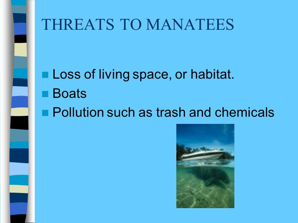 SAVE THE MANATEES.