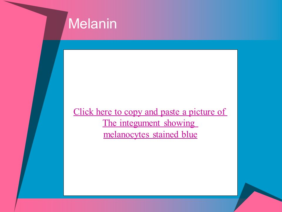 Melanin Click here to copy and paste a picture of The integument showing melanocytes stained blue