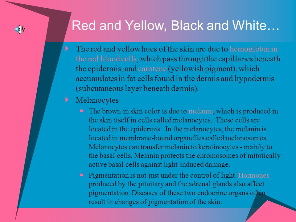 Red and Yellow, Black and White… The red and yellow hues of the skin are due to hemoglobin in the red blood cells, which pass through the capillaries beneath the epidermis, and carotene (yellowish pigment), which accumulates in fat cells found in the dermis and hypodermis (subcutaneous layer beneath dermis).