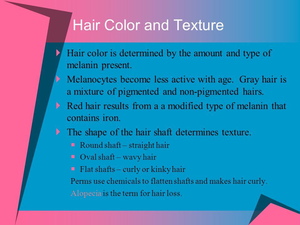 Hair Color and Texture Hair color is determined by the amount and type of melanin present. Melanocytes become less active with age. Gray hair is a mix