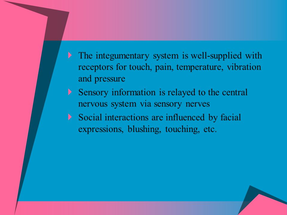 The integumentary system is well-supplied with receptors for touch, pain, temperature, vibration and pressure Sensory information is relayed to the central nervous system via sensory nerves Social interactions are influenced by facial expressions, blushing, touching, etc.