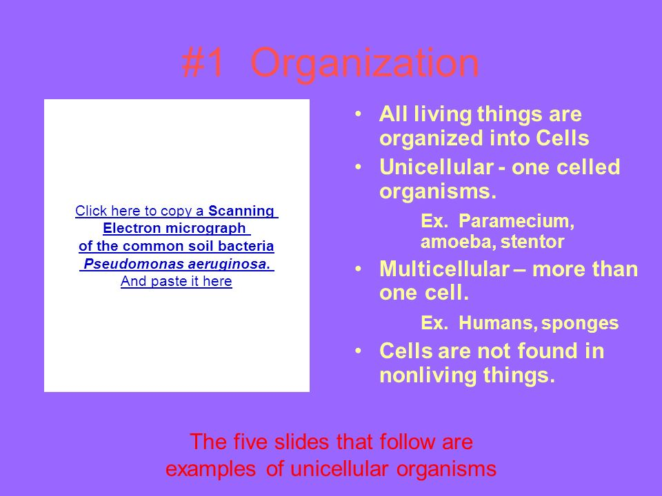 #1 Organization All living things are organized into Cells Unicellular - one celled organisms.