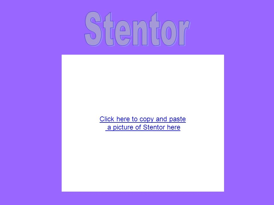 Click here to copy and paste a picture of Stentor here