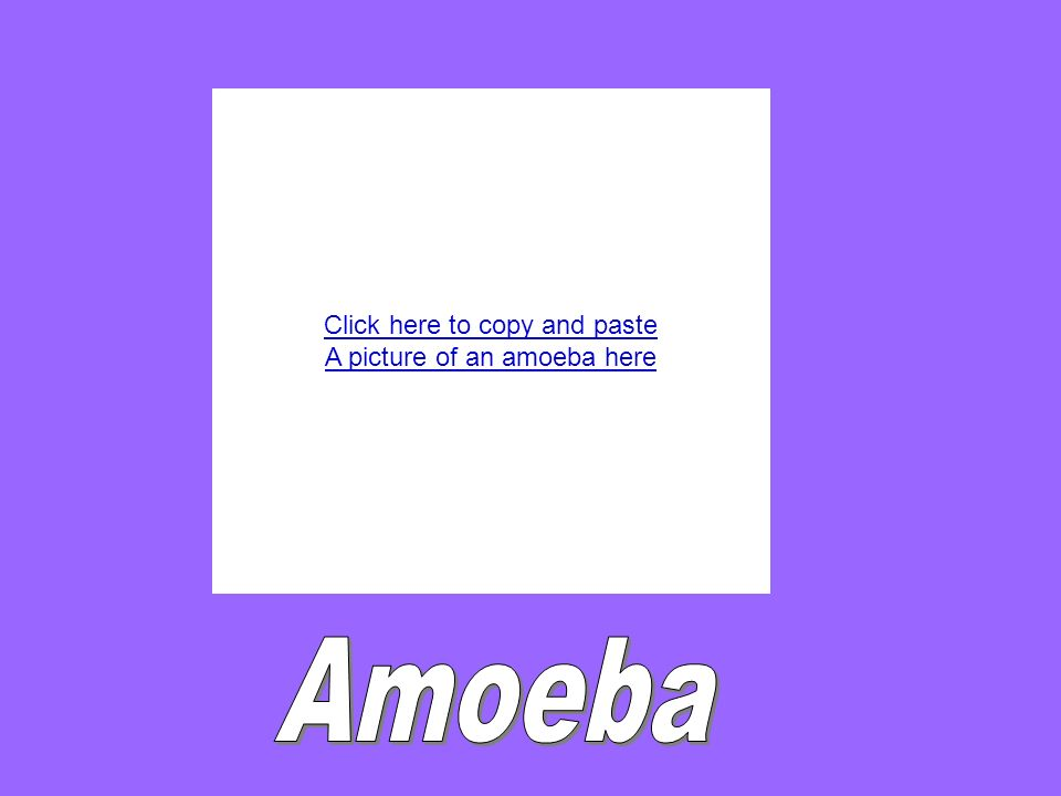 Click here to copy and paste A picture of an amoeba here