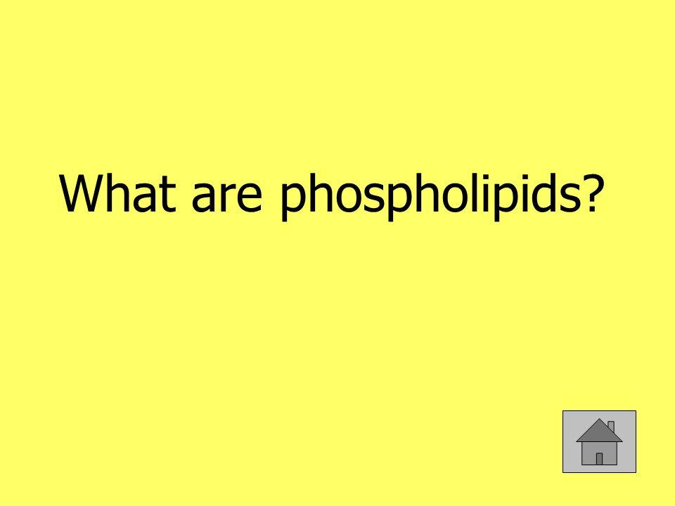 What are phospholipids?