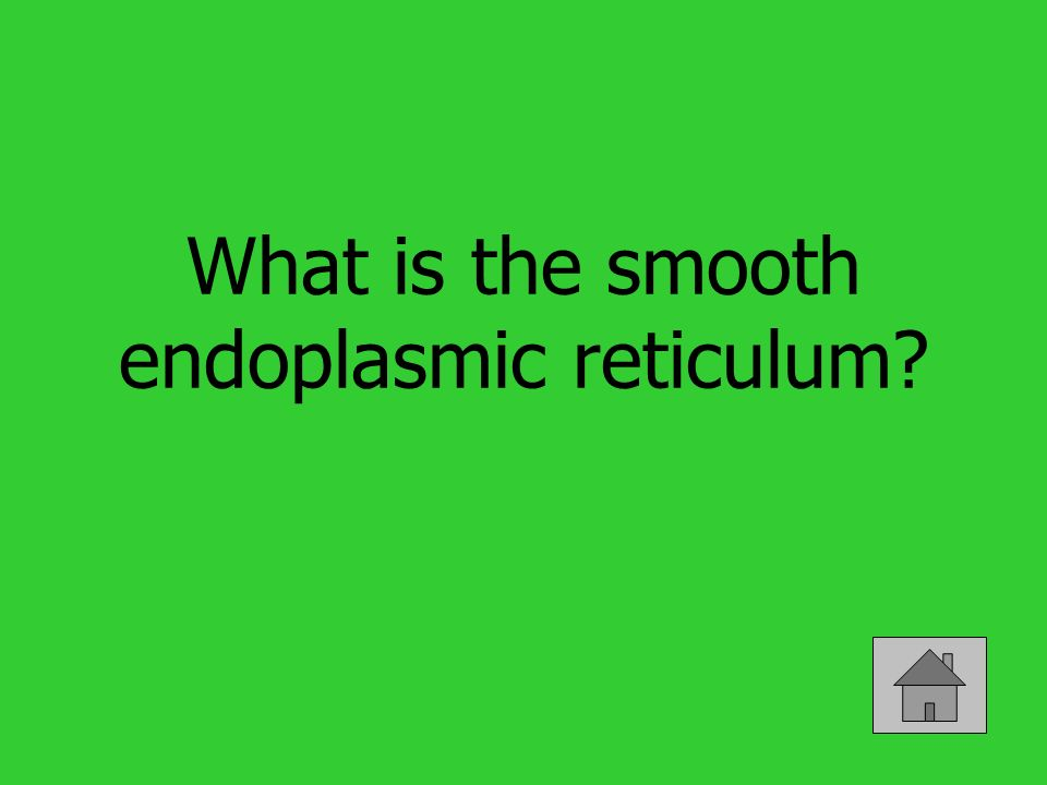 What is the smooth endoplasmic reticulum?