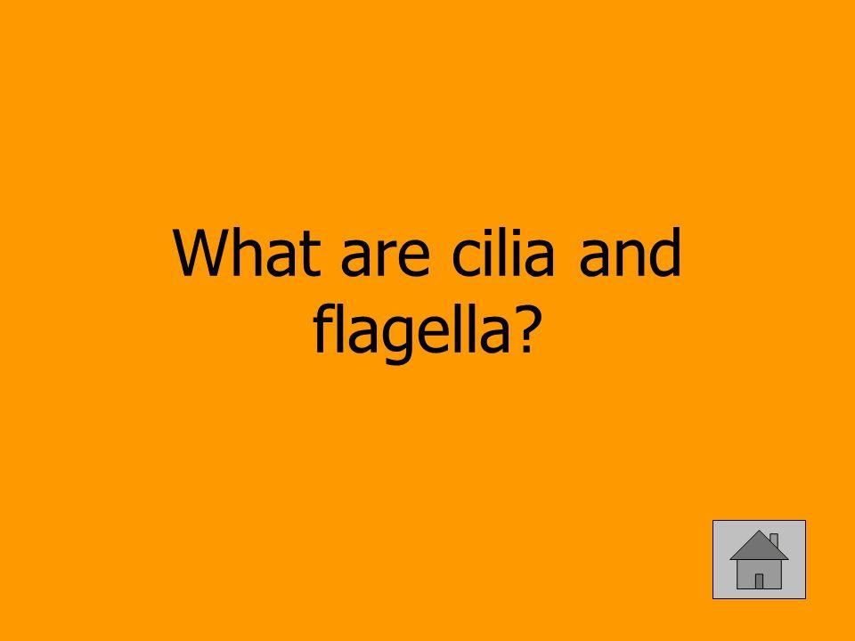 What are cilia and flagella?