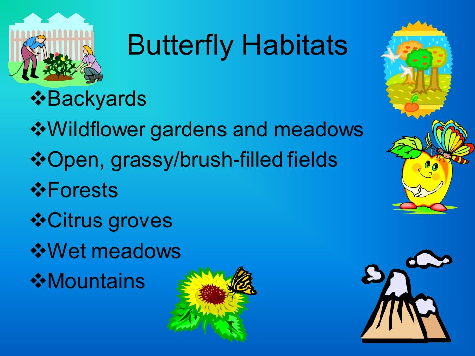 Butterfly Habitats Backyards Wildflower gardens and meadows Open, grassy/brush-filled fields Forests Citrus groves Wet meadows Mountains