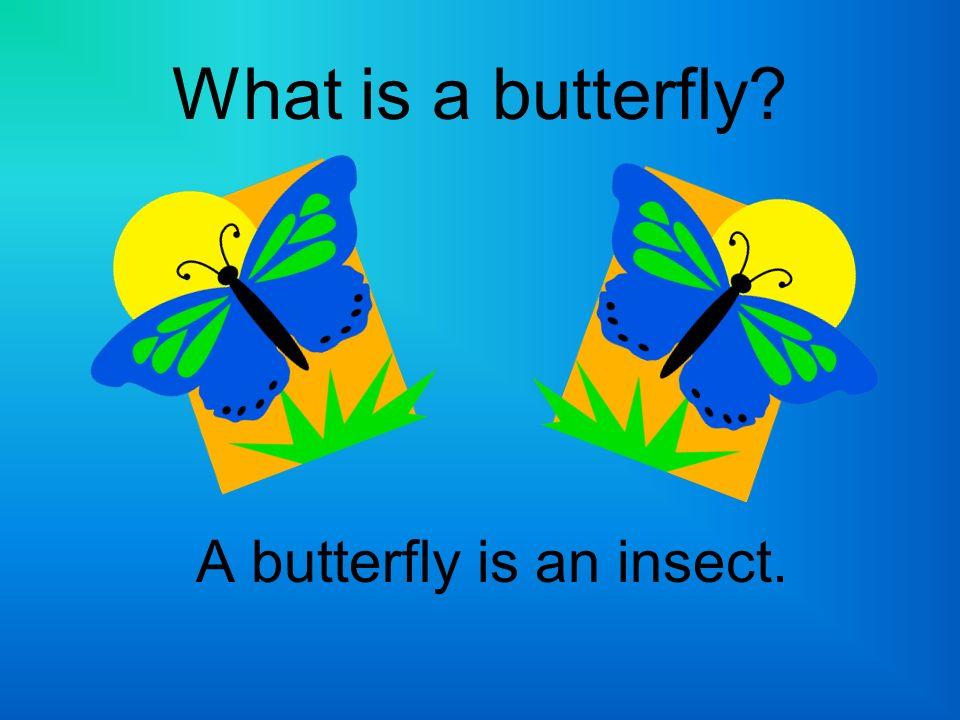 What is an insect.An insect: Has six jointed legs.