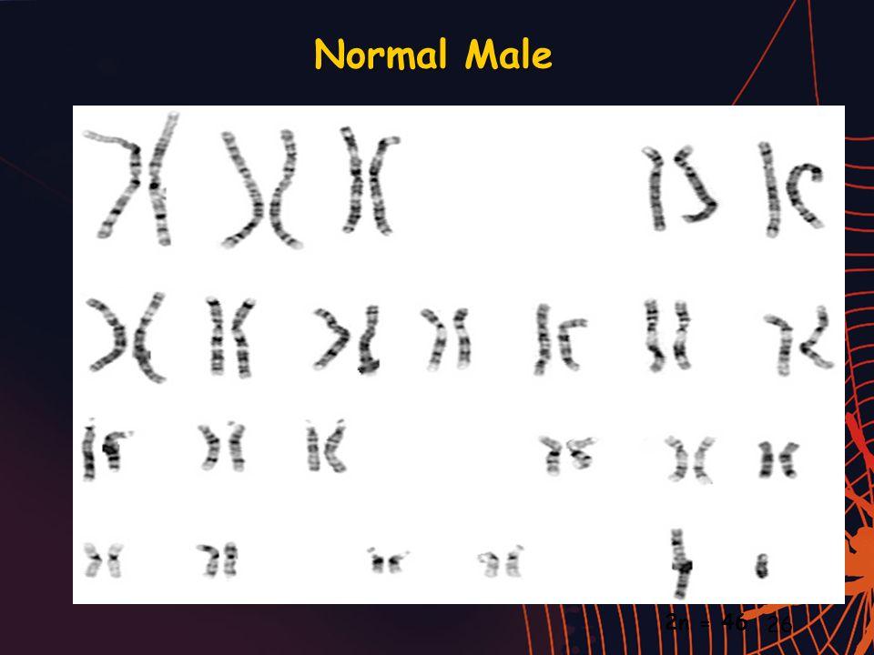 Normal Male 26 2n = 46