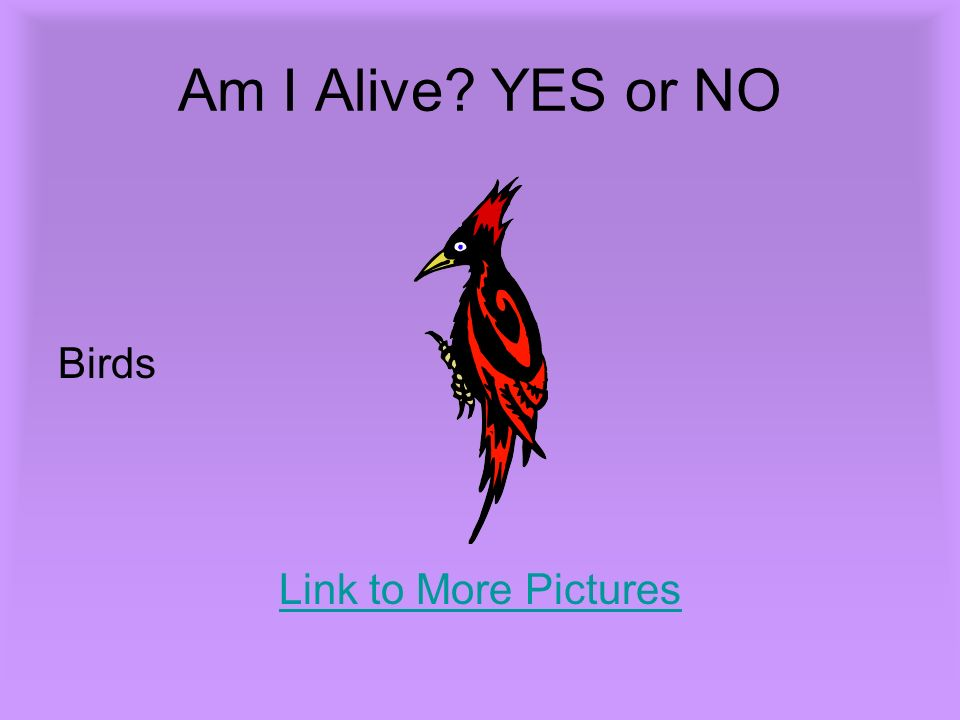 Am I Alive? YES or NO Birds Link to More Pictures